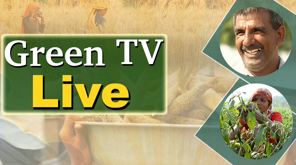 GREEN TV LIVE